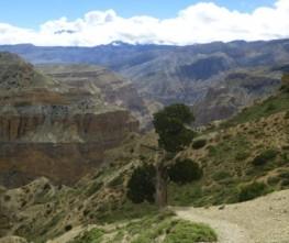 Short Upper Mustang Trekking