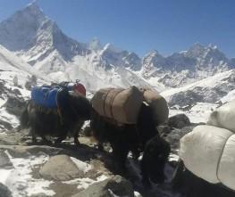 High Pass Trekking