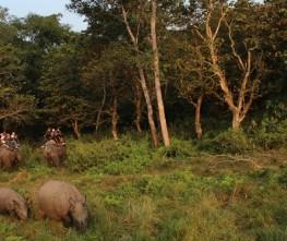 Chitwan Tour