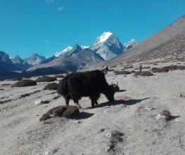 Lukla to Everest base Camp Trekking