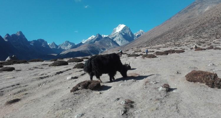 everest-trekking-from--lukla